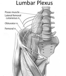 Femoral Nerve Location
