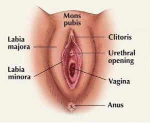 Labia Minora Location